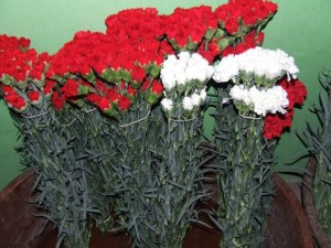red and white carnations